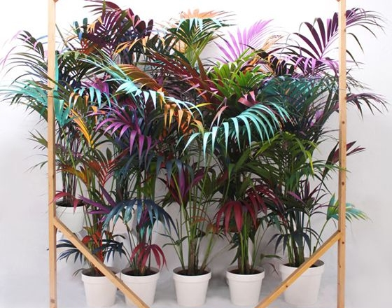 mequetrefismos-decoraçao-com-palmeiras1