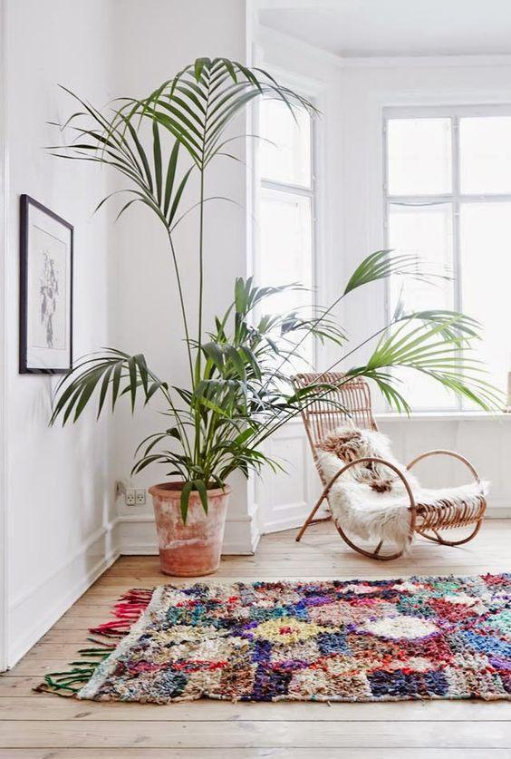 mequetrefismos-dicas-de-plantas-palmeiras