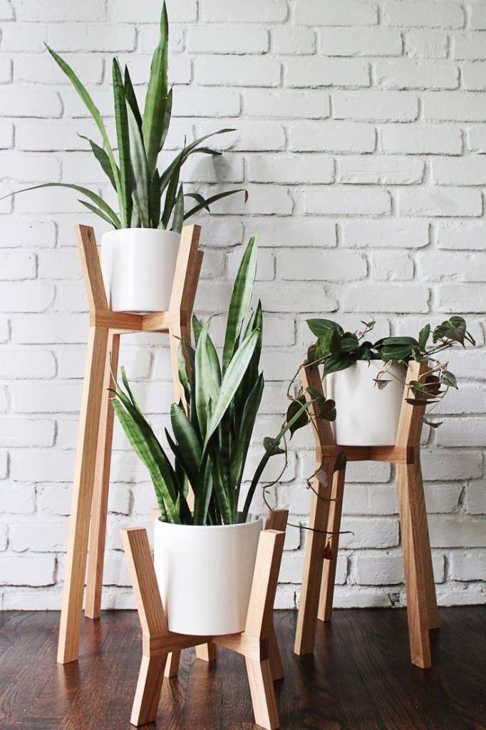 mequetrefismos-espada-de-sao-jorge-plantas-em-casa