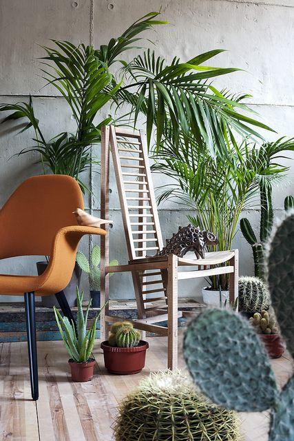 mequetrefismos-palmeiras-plantas