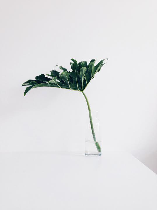 mequetrefismos-planta-costela-de-adao