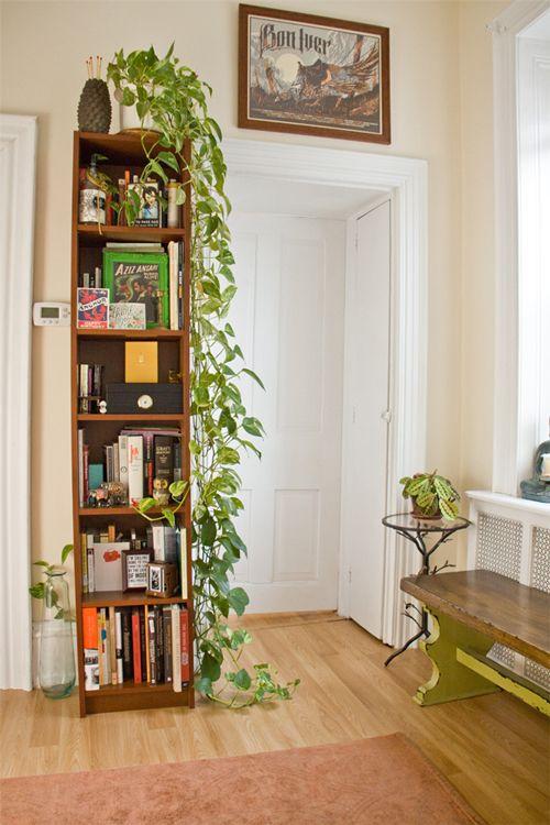 mequetrefismos-plantas-jiboias